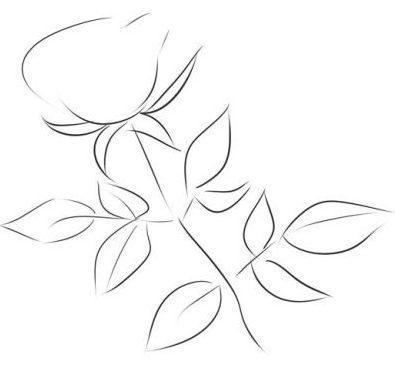 Comment Dessiner Une Rose Au Crayon Cours De Dessin Artacademie
