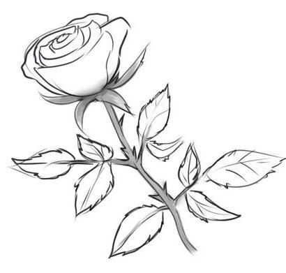 Comment Dessiner Une Rose Au Crayon Cours De Dessin
