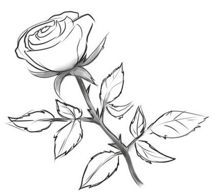 Dessin rose - Dessin de rose ...