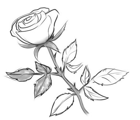 Comment dessiner une rose au crayon cours de dessin - Rose avec tige ...