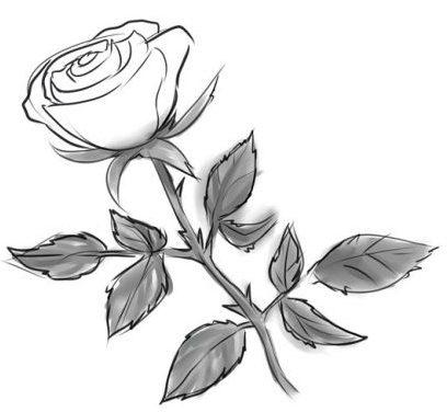 Comment Dessiner Une Rose Au Crayon Cours De Dessin Artacadémie