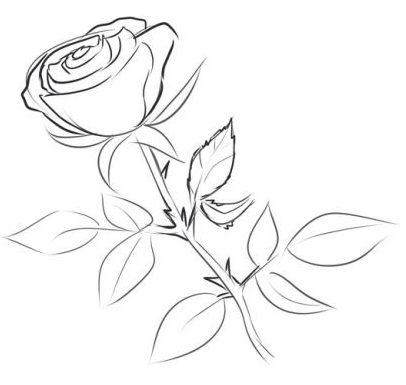 Comment Dessiner Une Rose Au Crayon Cours De Dessin Artacademie Paris Artacademie