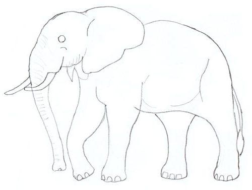 étape 5 comment dessiner elephant
