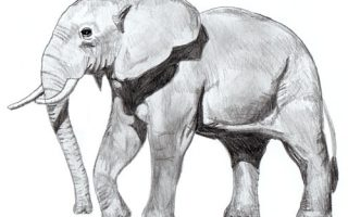 Dessiner elephant avec stage de dessin Artacademie Paris