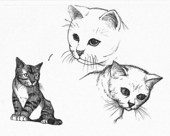 comment dessiner le tete de chat