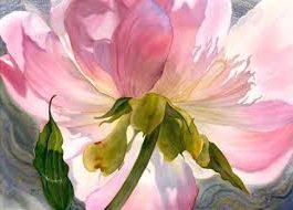 dessiner la fleur fleur