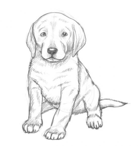Comment dessiner un chien. La leçon pour débutants